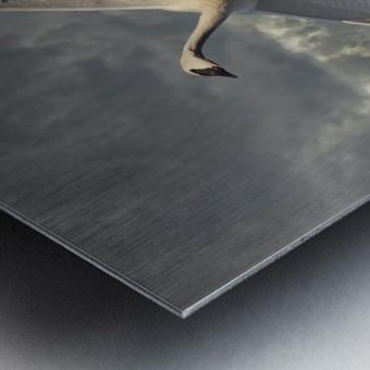 Swan on the Wing Metal print