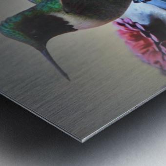 Colibris Metal print