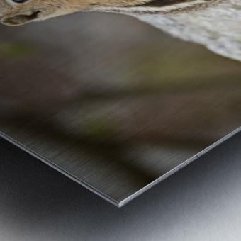 Chipmunk 2 Metal print