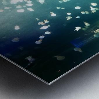 Aquarium Metal print