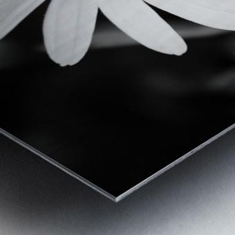 Beautifully White B&W Metal print