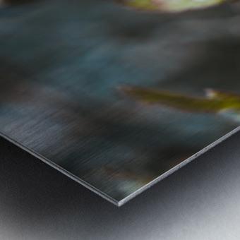 DSC_1735 Metal print