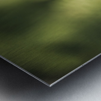 Green as the fern  Metal print