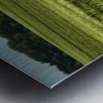 Wheat Fields Metal print