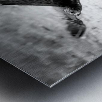 AdriaanPrinsloo 7140 Metal print