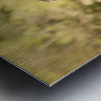 AdriaanPrinsloo 6942 Metal print
