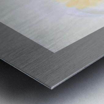 29 Metal print