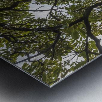 Resilience - Spiral Vertical Metal print