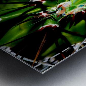 Neon Black Velvet Cactus 1 Metal print