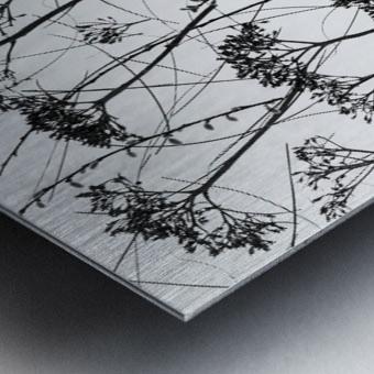 Silhouette of dried plants Metal print
