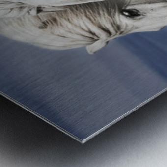Blowing by Bragi Ingibergsson Metal print