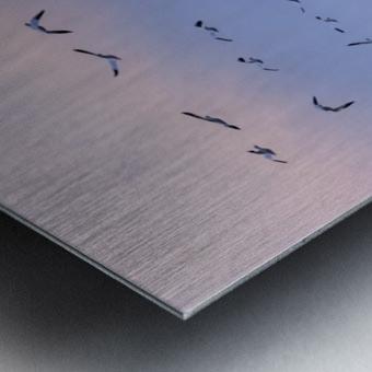 Snow Geese Metal print