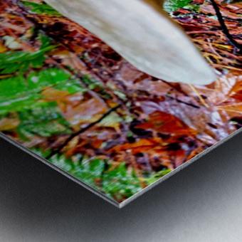 Tiny World 4 of 8 - Mushrooms and Fungi Metal print