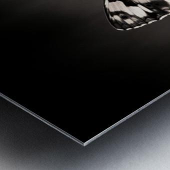 Medioluto norteA±a Metal print