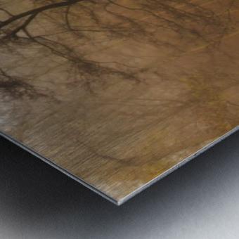 Which Path II Metal print