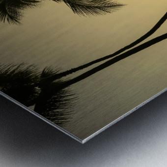 Through the Palms Metal print