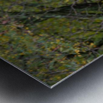 Portrait ap 2906 Metal print