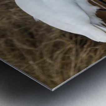 Great White Egret ap 2802 Impression metal