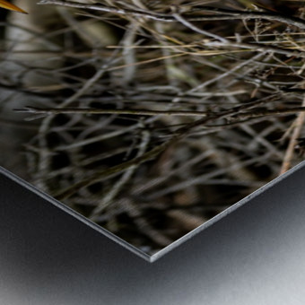 Great White Egret ap 2807 Impression metal