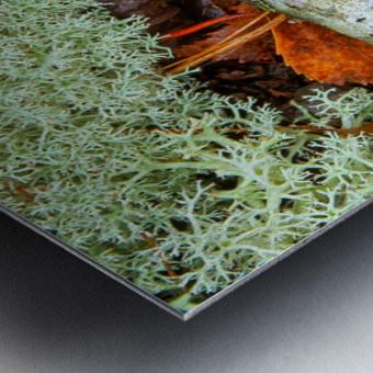 Pin Oak Leaf ap 1557 Metal print
