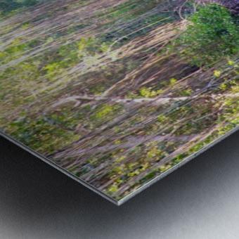 Caroni Swamp   Trinidad Metal print