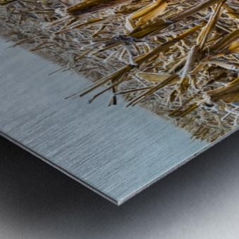 Frost ap 2031 Metal print
