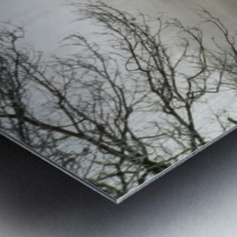 Pasture ap 2033 Metal print