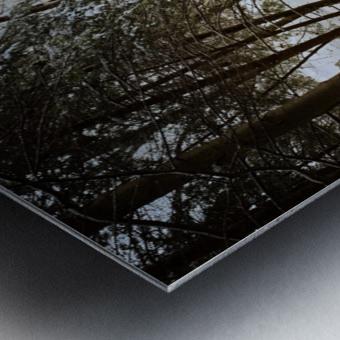 Sunlight ap 2731 Metal print