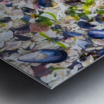 Barnacle Shells ap 1528 Metal print