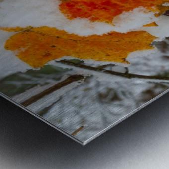Early Snow ap 1571 Metal print