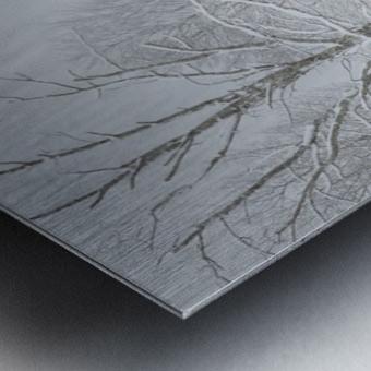 Treeline apmi 1569 Metal print