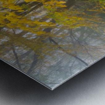 Fall Color apmi 1865 Metal print