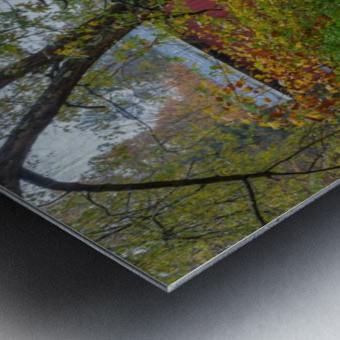 Maple Tree apmi 1919 Metal print