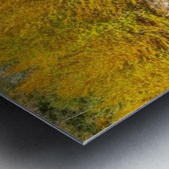 Red Creek Aspens apmi 1769 Metal print