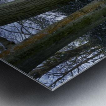 Woods in the Snow Metal print
