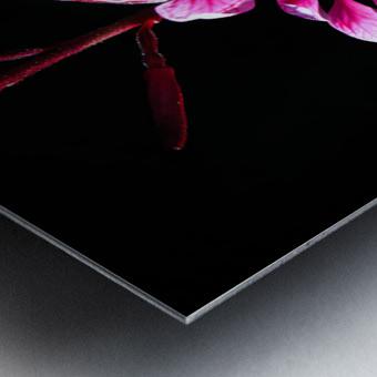 Love Flower Metal print