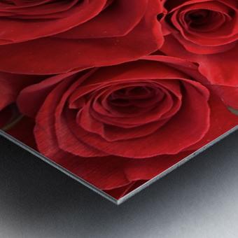 Eternal Roses Metal print
