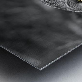Pounce Metal print