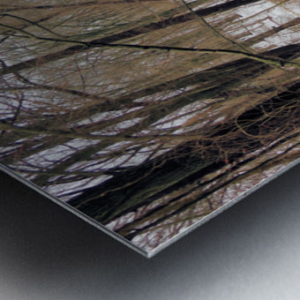 Lake Panorama Metal print