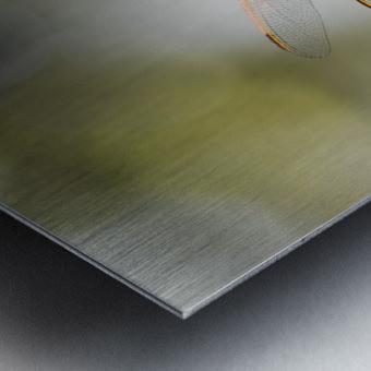 PEEK-A-BOO  Collection 1-4 Metal print