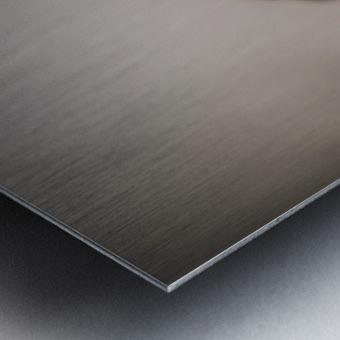 fluitantia desiderari  Metal print