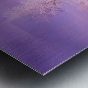 Dreaming In Purple Metal print