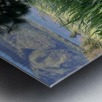 Blossom in Tall Grass Metal print