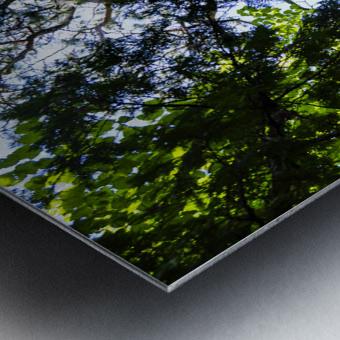 Skyview Canopy Metal print