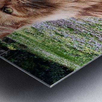 6EAF818C B42F 4654 9C27 07B4D4629391 Metal print