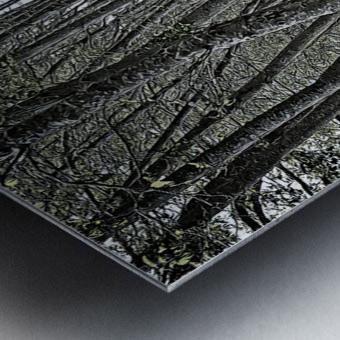 Boardwalk in the Woods Metal print