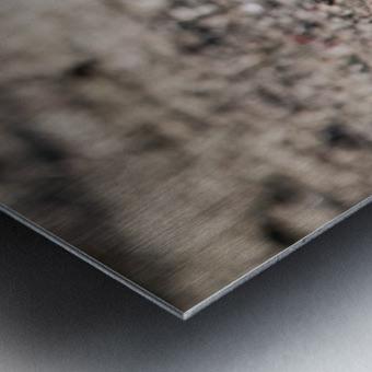 Lonely Sandpiper Metal print