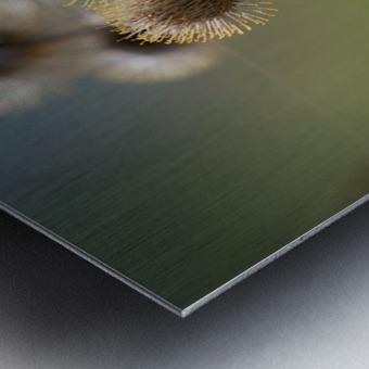 Burdock Bouquet Metal print