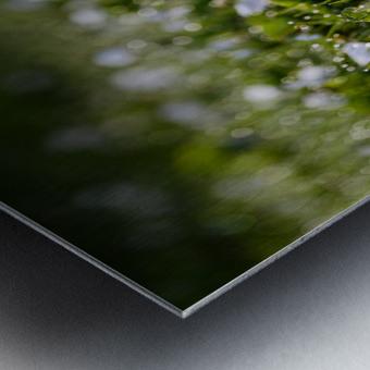 Confettis au jardin 2 Metal print