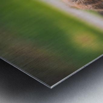Gooses  Metal print